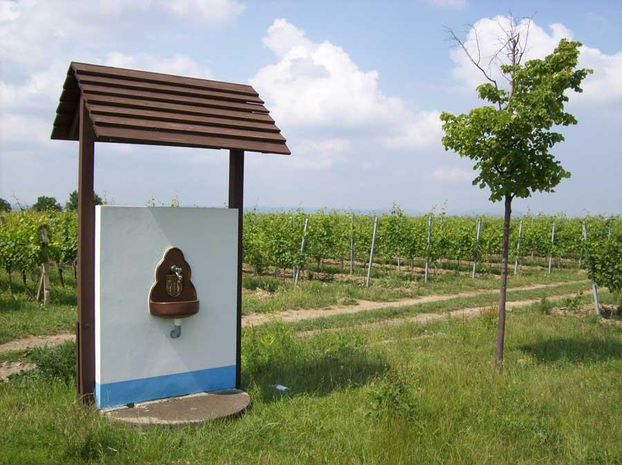 osvěžující pitná voda uprostřed vinohradu